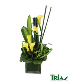 Yellow calla lilies in a vase