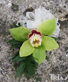 Green Orchid Corsage Trias Flowers Miami
