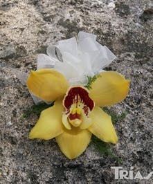 Corsage Yellow Cymbidium Orchid