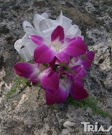 Corsage Purple Dendrobium Orchids