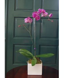 Single Purple or White Orchid