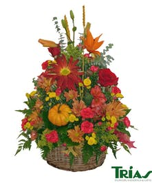 Celebrate a Season of Color