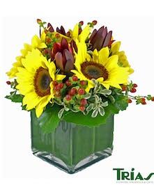 Stunning sunflowers!