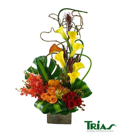 yellow calla lillie's, fresh red and oranges roses, green hydrangea accented by curly willow and masangena leaves