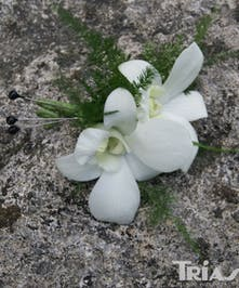 Prom Formal Homecoming Orchid Boutonniere
