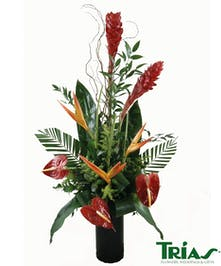 Exotic Birds of Paradise Anthurium Bouquet in a Vase