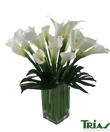 Generously designed with white calla lilies and monstera leaves  in a clear glass vase