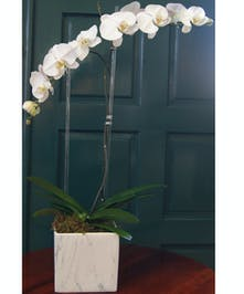 Elegant White Marble ceramic vase with 2 Orchid Plants