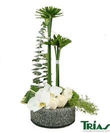 White phalaenopsis orchids, roses, green tricks and umbrella palms
