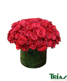 One hundred beautiful red roses