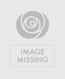 Pink rose arrangement in tall white vase