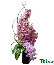 Orchid Elegance in a tall black vase