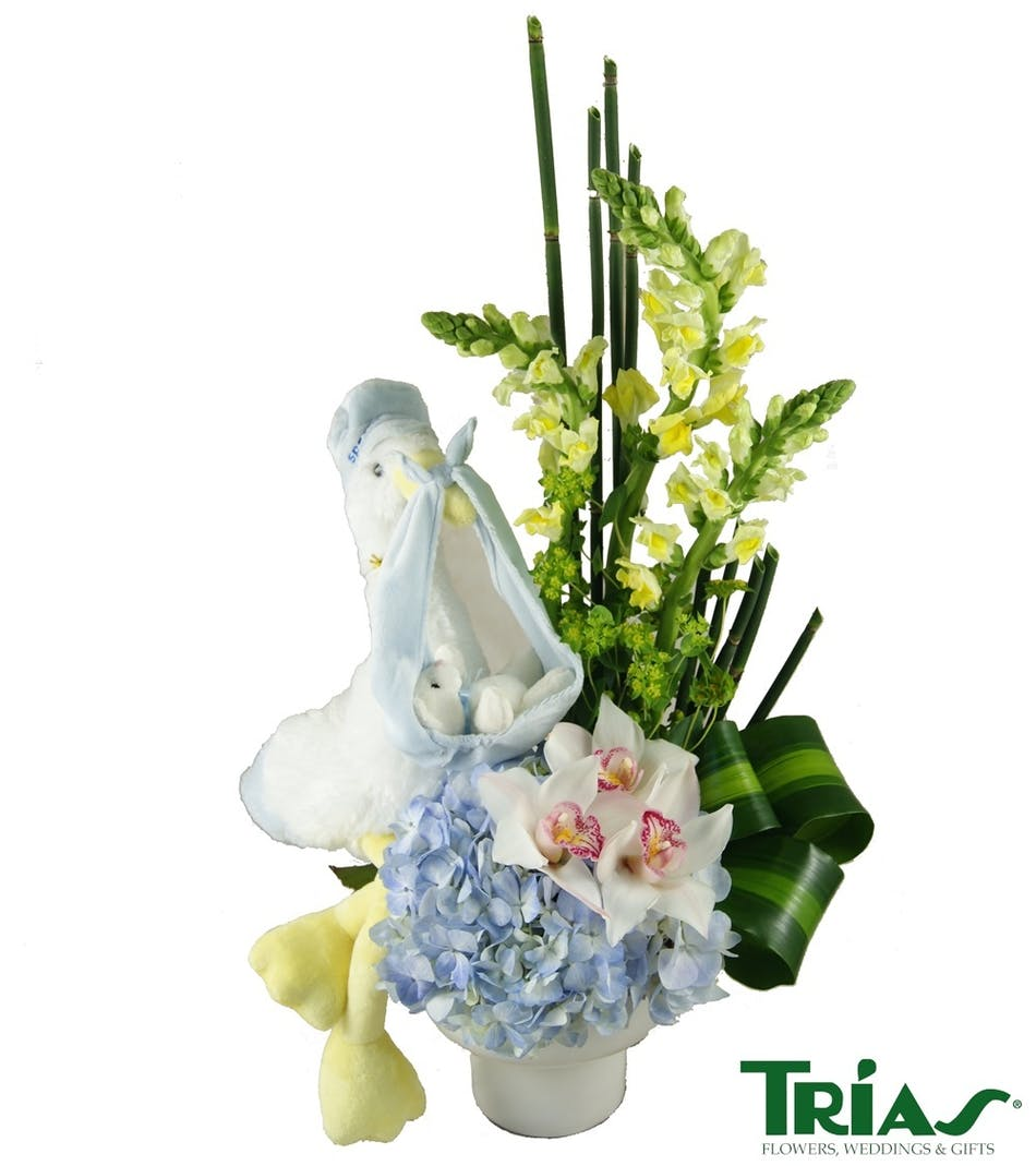 Baby Boy - Special Delivery: Blue & White Fresh flowers with a ...