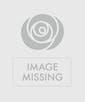 Succulent Nursery