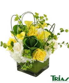 A cheerful design of white, yellow and green fresh flowers
