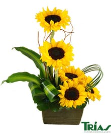 Cheerful Sunflower garden.