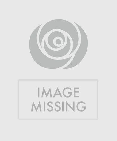 White Sophistication Trias Flowers Miami Fl