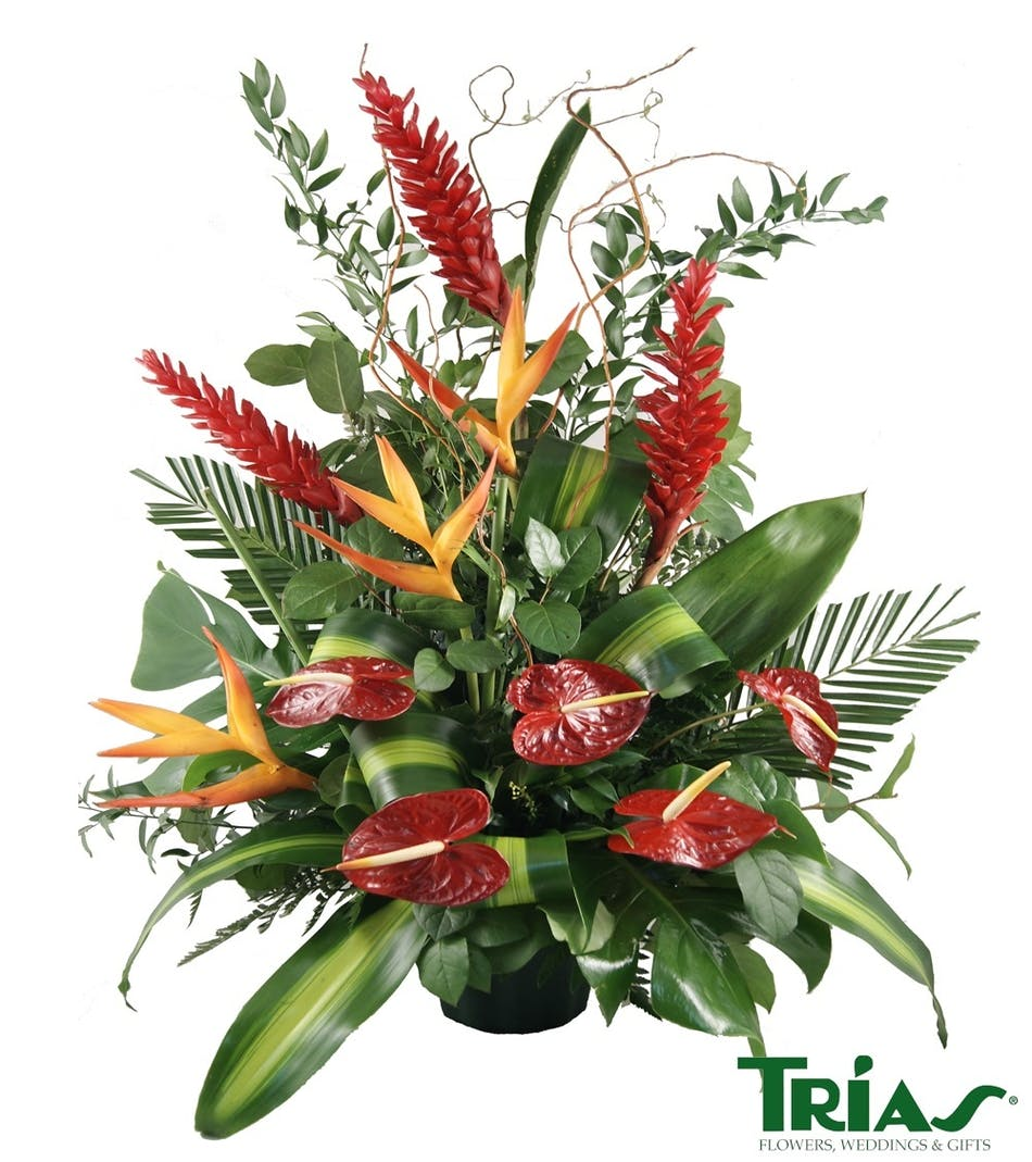 Funeral Flower Arrangements Miami Image Collections Flower
