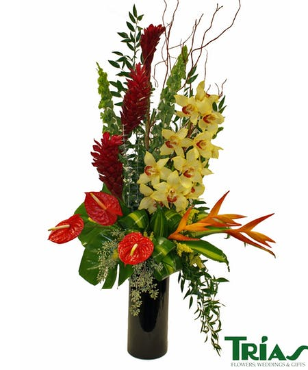 Tropical and Exotic Flowers