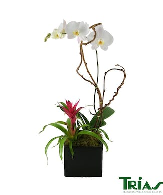 Single Orchid with Bromeliad