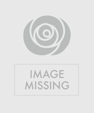 Double Orchid Gold Bow