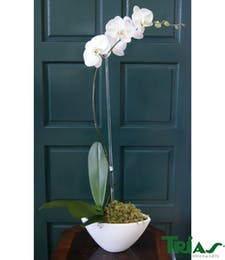 Single Orchid- White Napa Vase