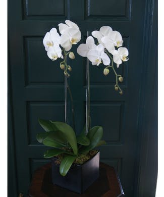 Double Orchid - White w/ Glass Rods