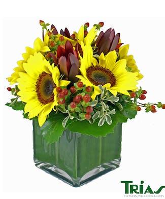 Sunflower Sensation