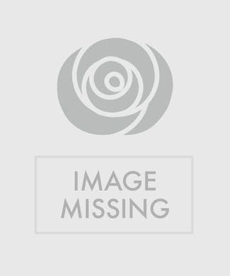 White Dendrobium Silver Vase
