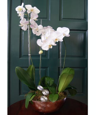 Triple Orchid - Silver Oval Vase