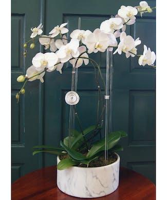 Quadruple Orchid Round Marble Vase