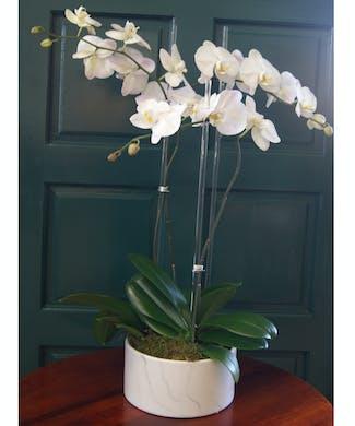 Triple Orchid Round Marble Ceramic Vase
