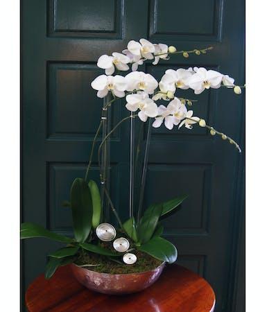 Orchid Plant Quadruple Silver Round Vase